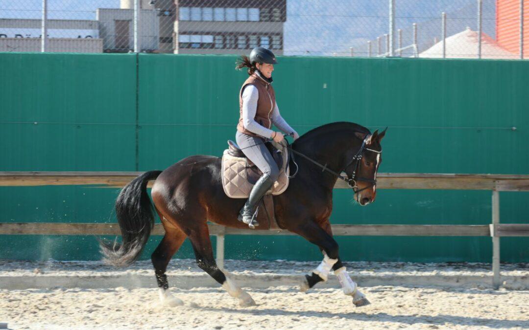 Pferde- und Fahrsportmarkt 2019